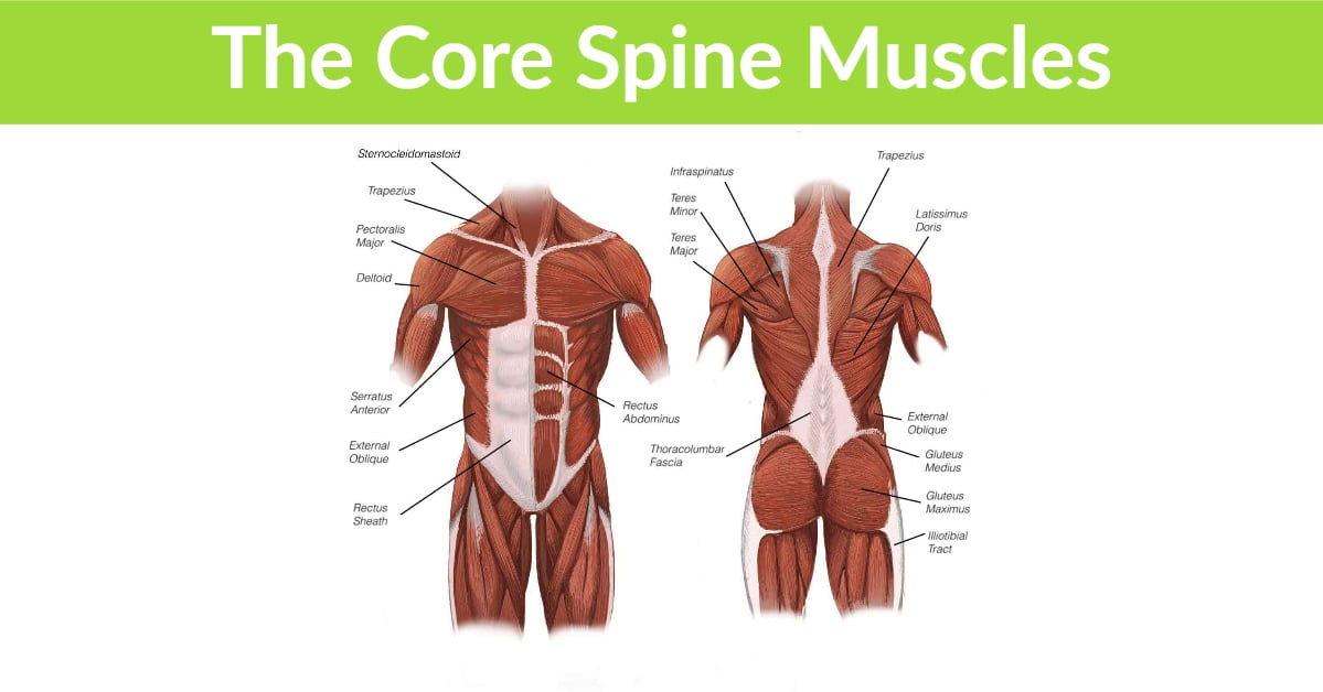 Core Spine Muscles