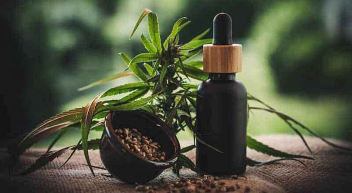 Why should you consider giving CBD flowers to loved ones?
