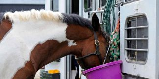 Functional Nutrition Supports Horse Performance