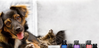 Life Line Pet Nutrition announces the launch of a new, customer-centric website