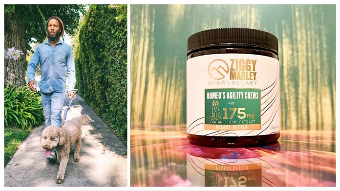 Musician (and dog dad) Ziggy Marley launches CBD chews for your pet