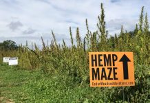 Lancaster County's Hemp Maze gives a twist to an autumn tradition