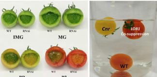 New regulator improves both texture and nutritional quality