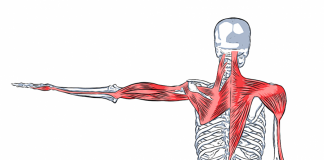 Acupuncture and myofascial lines for the neck, back and shoulders