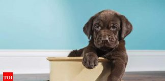 Everything you need to know about puppy nutrition