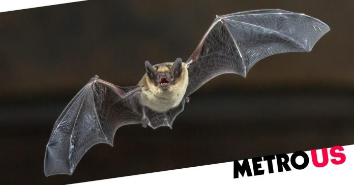 Man wakes up with a bat on his neck and dies of rabies in Illinois