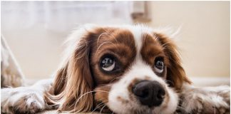 Anxiety Issues in Pets: Does Your Dog/ Cat Feel Anxious? How to Find Out And What to do?