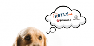 Best CBD Oil For Pets Ranked In 2022